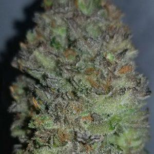 Cannabis Seeds Canada 30